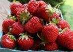 Praca sezonowa w Holandii przy zbiorach owoców i warzyw
