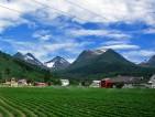 Praca przy zbiorach truskawek w Norwegii