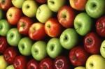 Holandia praca dla pary przy zbiorach jabłek – para szuka pracy