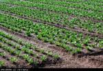 Oferty pracy na plantacjach w Niemczech