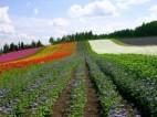 Praca przy kwiatach w Niemczech – Bassum OD ZARAZ PILNE 6.90netto/h