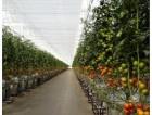 Francja praca sezonowa przy zbiorach warzyw w szklarni od zaraz