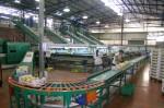 Praca w Niemczech przy sortowaniu i pakowaniu warzyw