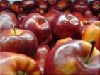 Praca we Francji przy zbiorze jabłek