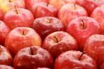 Praca przy zbiorze owoców w Danii – bez języka