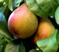 Zbiory owoców – praca w Norwegii 2013