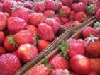 Oferty pracy Norwegia – zbiory truskawek na wakacje (rolnictwo) 2013