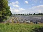 Zbiory szparagów – praca w Niemczech od czerwca 2013 (Hannover)