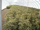 Niemcy praca w szklarni przy zbiorach, uprawie warzyw Berlin bez doświadczenia