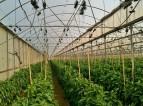 Zbiory praca w Danii w szklarniach dla Polaków od zaraz w ogrodnictwie