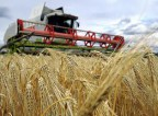 Aktualna oferta fizycznej pracy w Wielkiej Brytanii na farmie przy zbiorach