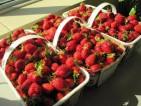 Oferta pracy w Norwegii zbiory truskawek bez języka wakacje 2014
