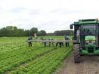 Sezonowa praca w Wielkiej Brytanii w rolnictwie bez znajomości języka 2014