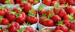 Sezonowa praca w Holandii przy zbiorze truskawek w szklarni Limburgia