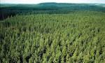 Dam pracę w Niemczech bez języka dla pracownika szkółki leśnej Weener