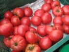 Praca w Holandii dla kobiet bez języka przy zbiorach, pakowaniu pomidorów Rotterdam