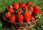 Oferta pracy w Anglii bez znajomości języka przy zbiorach owoców Dover