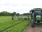 Praca w Niemczech przy warzywach zbiory Dortmund 2014