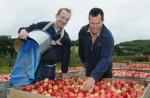 Oferta fizycznej pacy w Niemczech przy zbiorach jabłek w sadzie bez języka