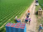 Oferta pracy w Niemczech na rok 2015 w Dreźnie dla studentów przy zbiorach